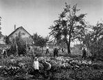 GFA 13/150: Bilder aus den Wohnkolonien der Eisen und Stahlwerke vormals Georg Fischer in Schaffhausen und Singen