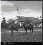 GFA 17/520675: Eisenbibliothek, Einweihungsfeier: Pferde im Klostergut Paradies