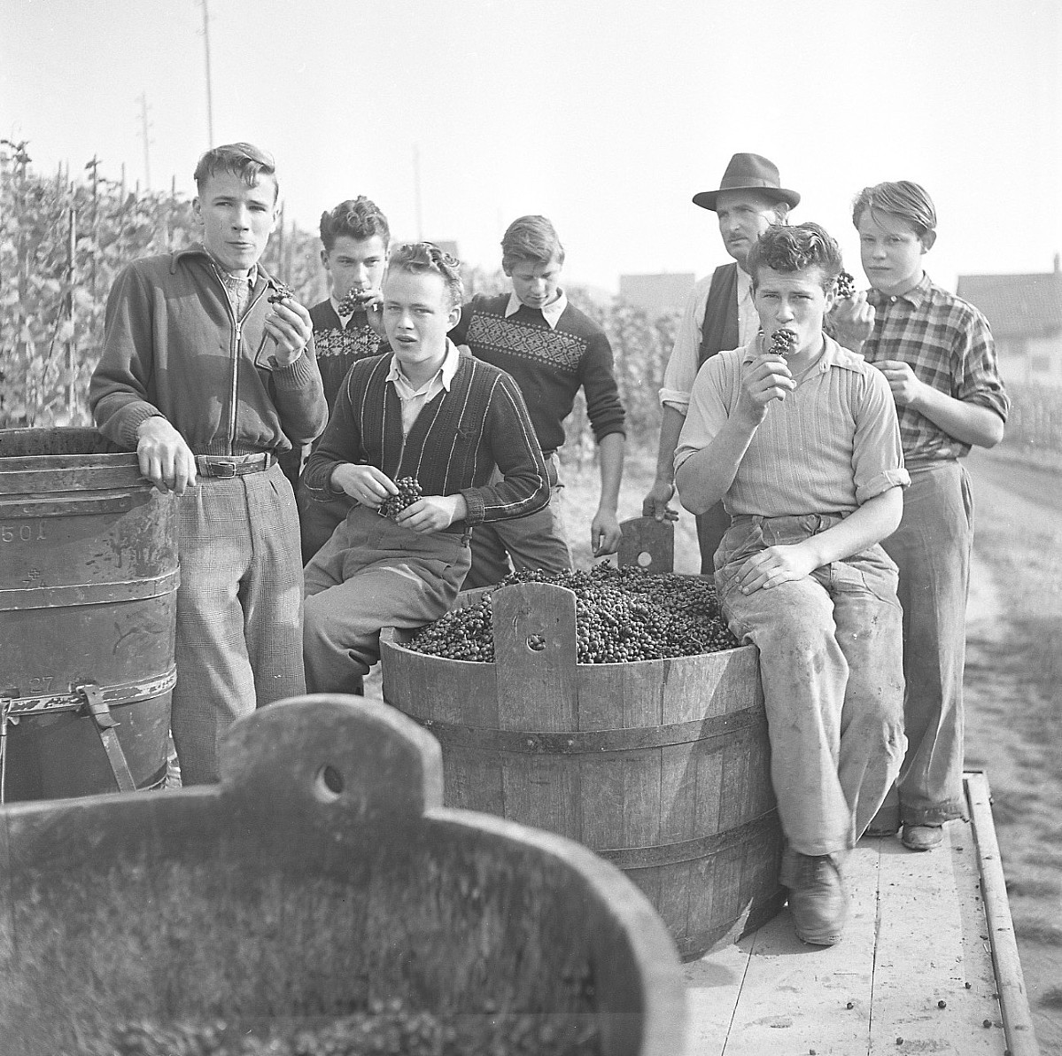 GFA 17/510963.12: Grape harvest at the apprentices' home in Dachsen