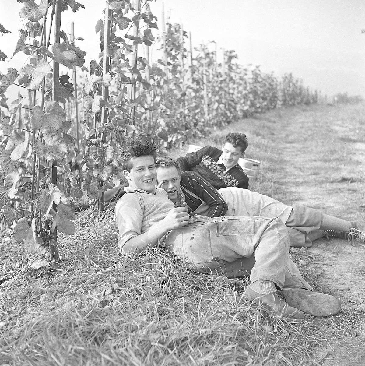 GFA 17/510963.9: Grape harvest at the apprentices' home in Dachsen